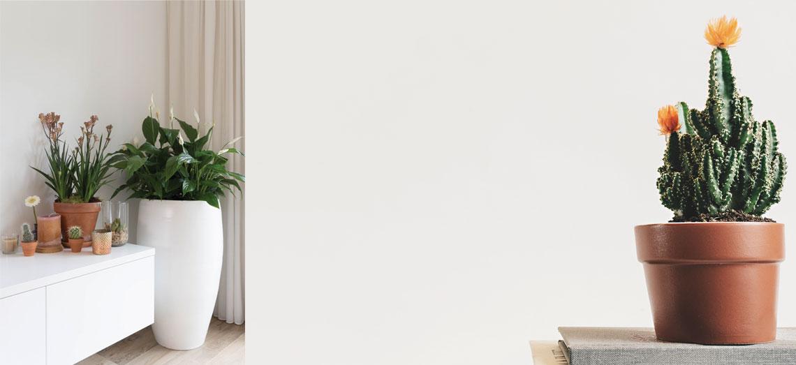 Nieuwe interieurtrend - De plant als blikvanger